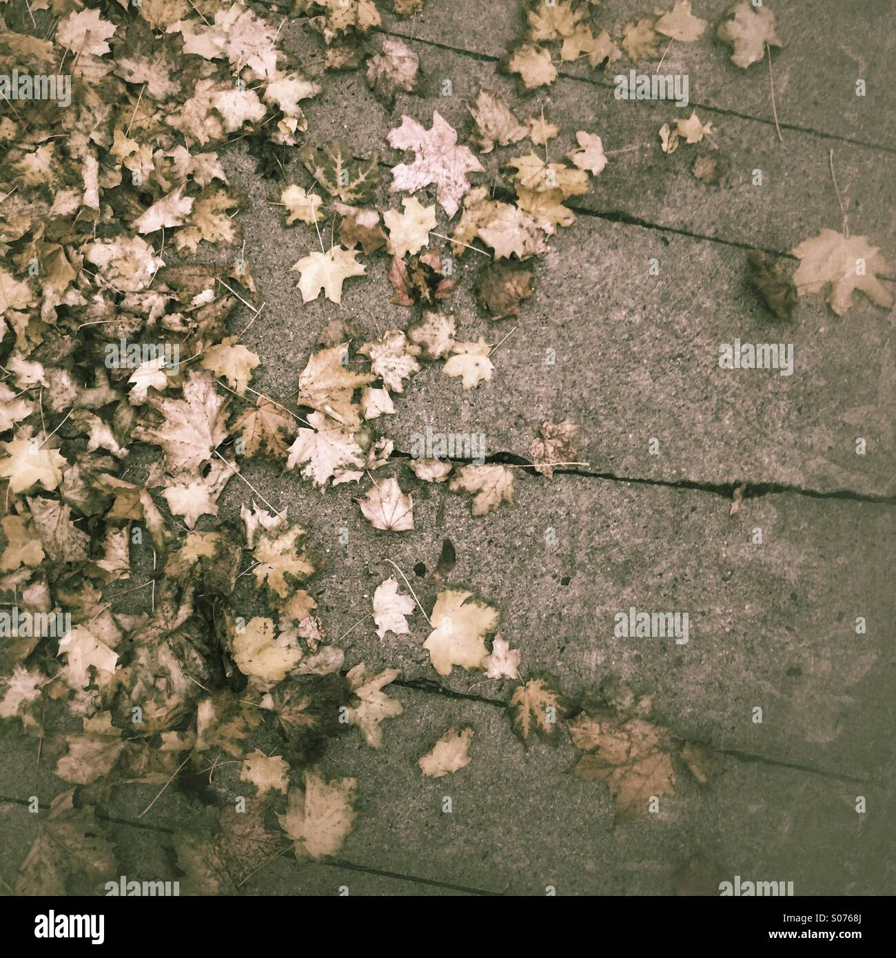 Tree leaves fall to the ground, Autumn - Stock Image