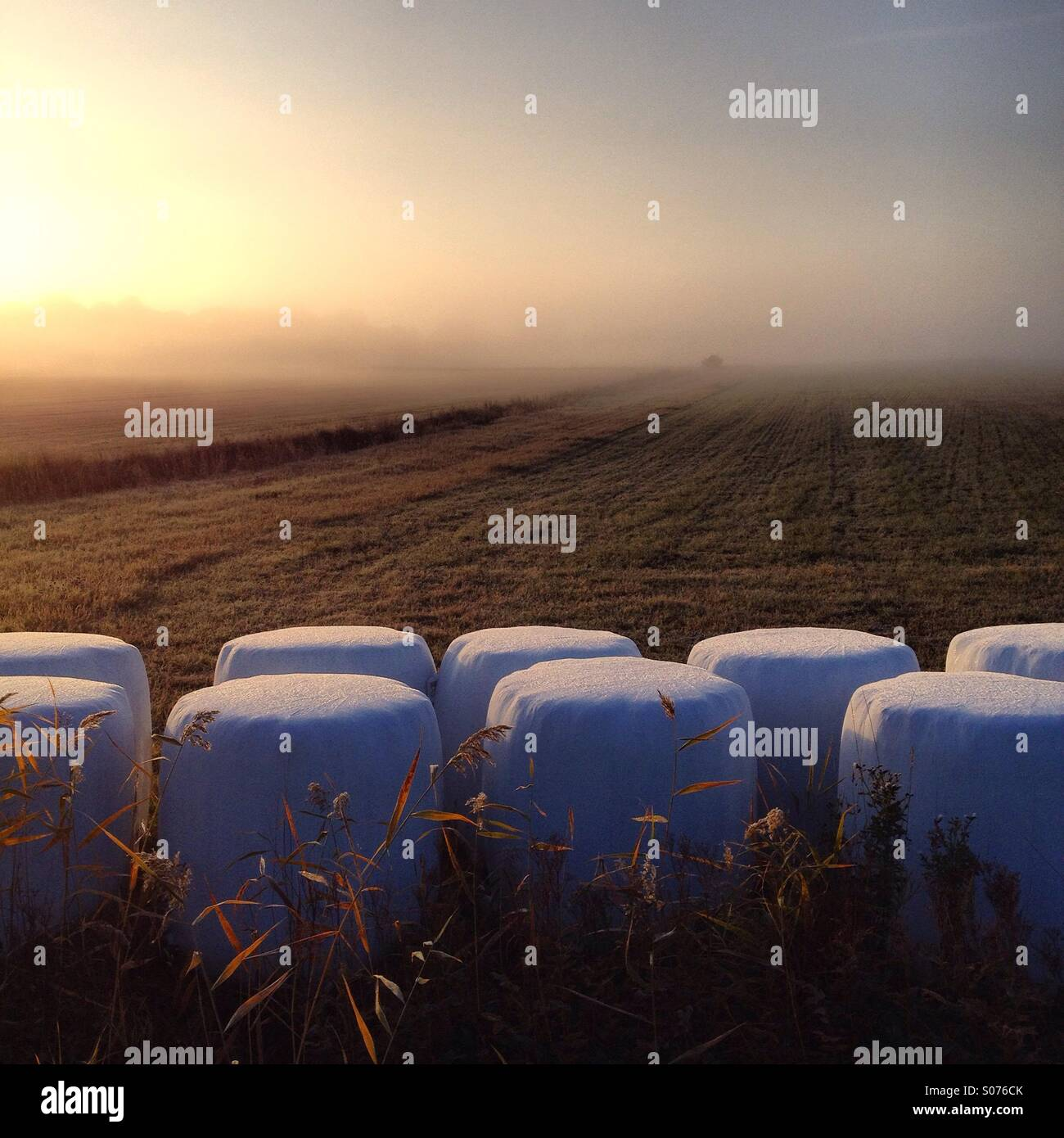 Wrapped hay bales in morning autumn mist in the Finnish Baltic Archipelago island of Åland - Stock Image