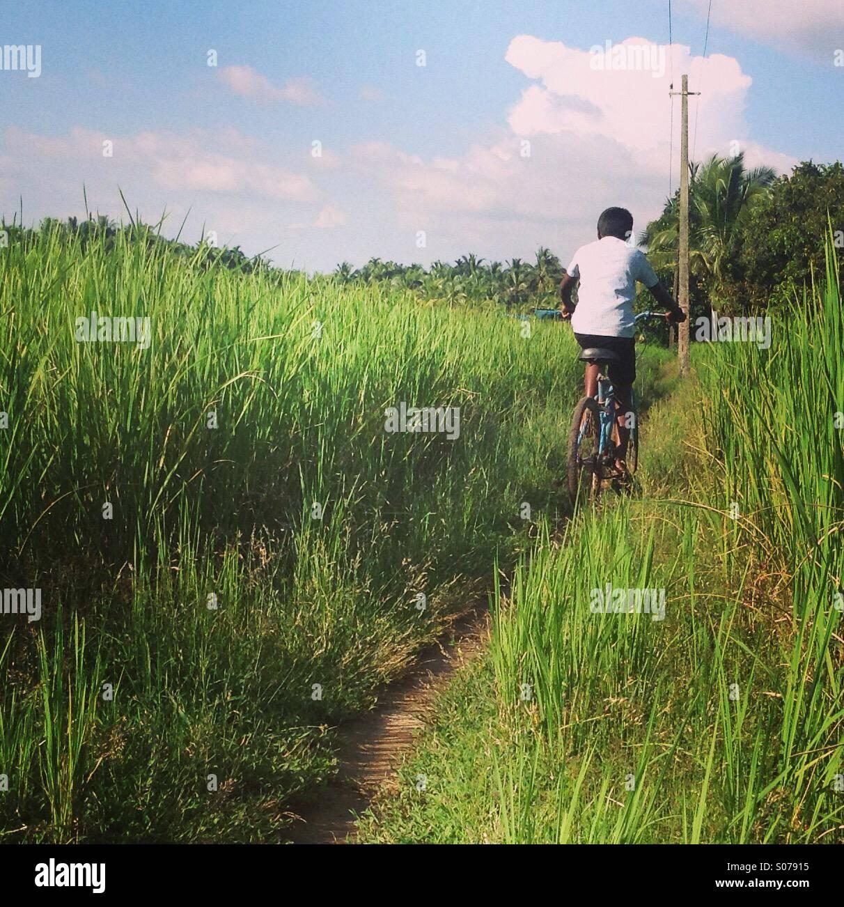 Boy cycling through rice fields in rural Kerala, India - Stock Image