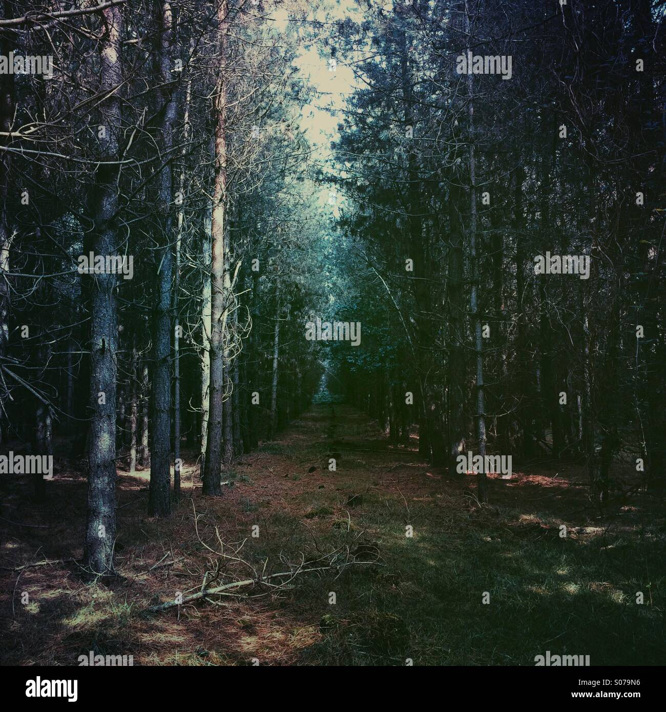Dark forest with light in the distance - Stock Image