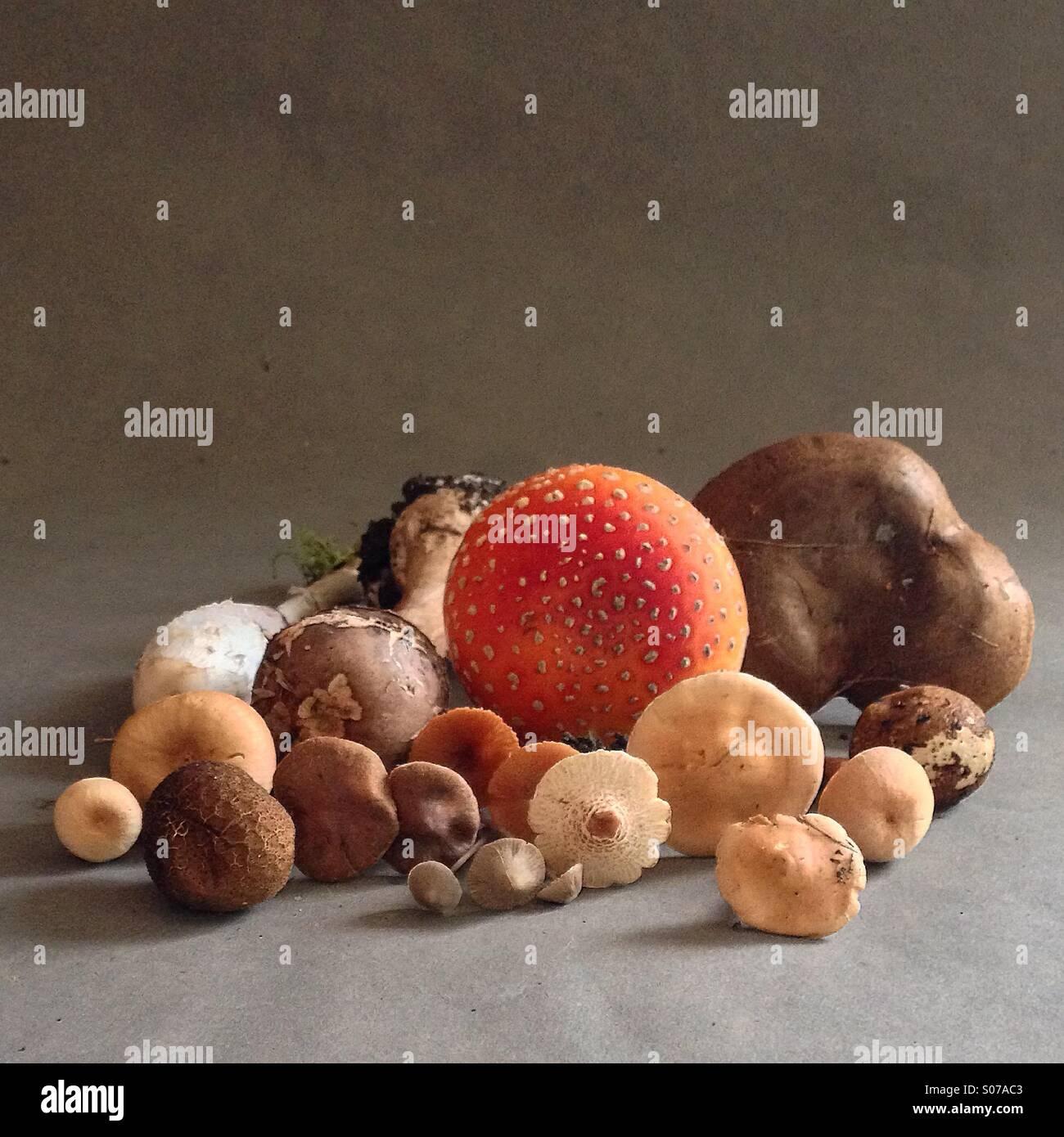 Fungi still life - Stock Image