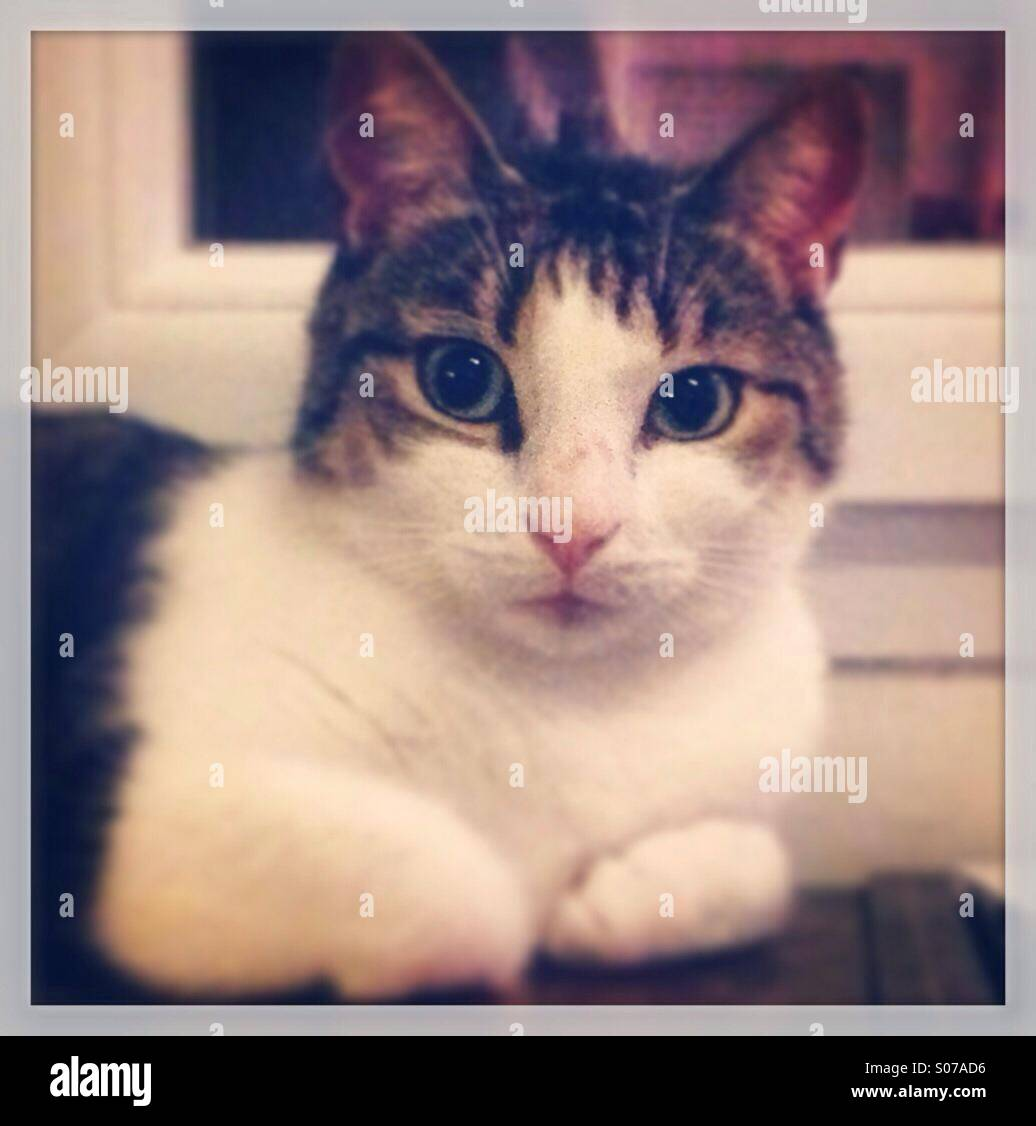 One of my 3 cats. - Stock Image