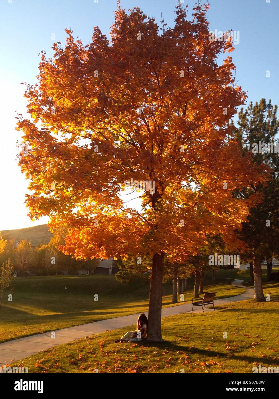 A child sits under a bright orange tree at a park in Salt Lake City, UT. - Stock Image