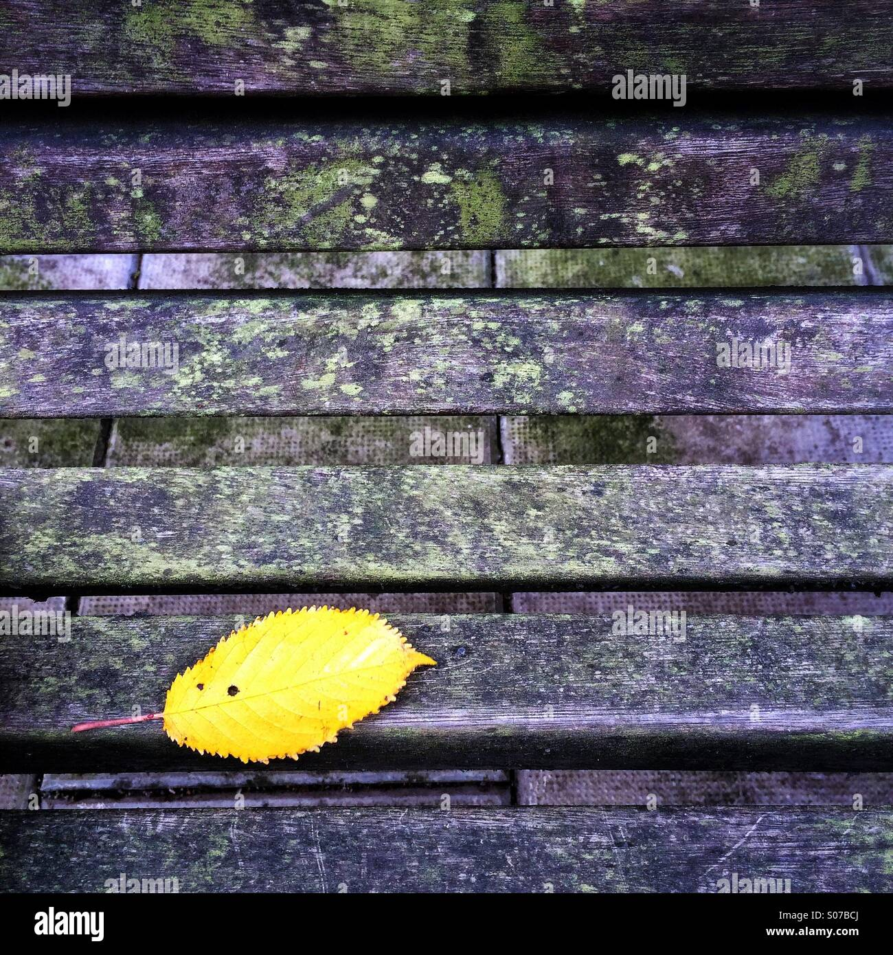 Yellow autumn leaf on park bench - Stock Image