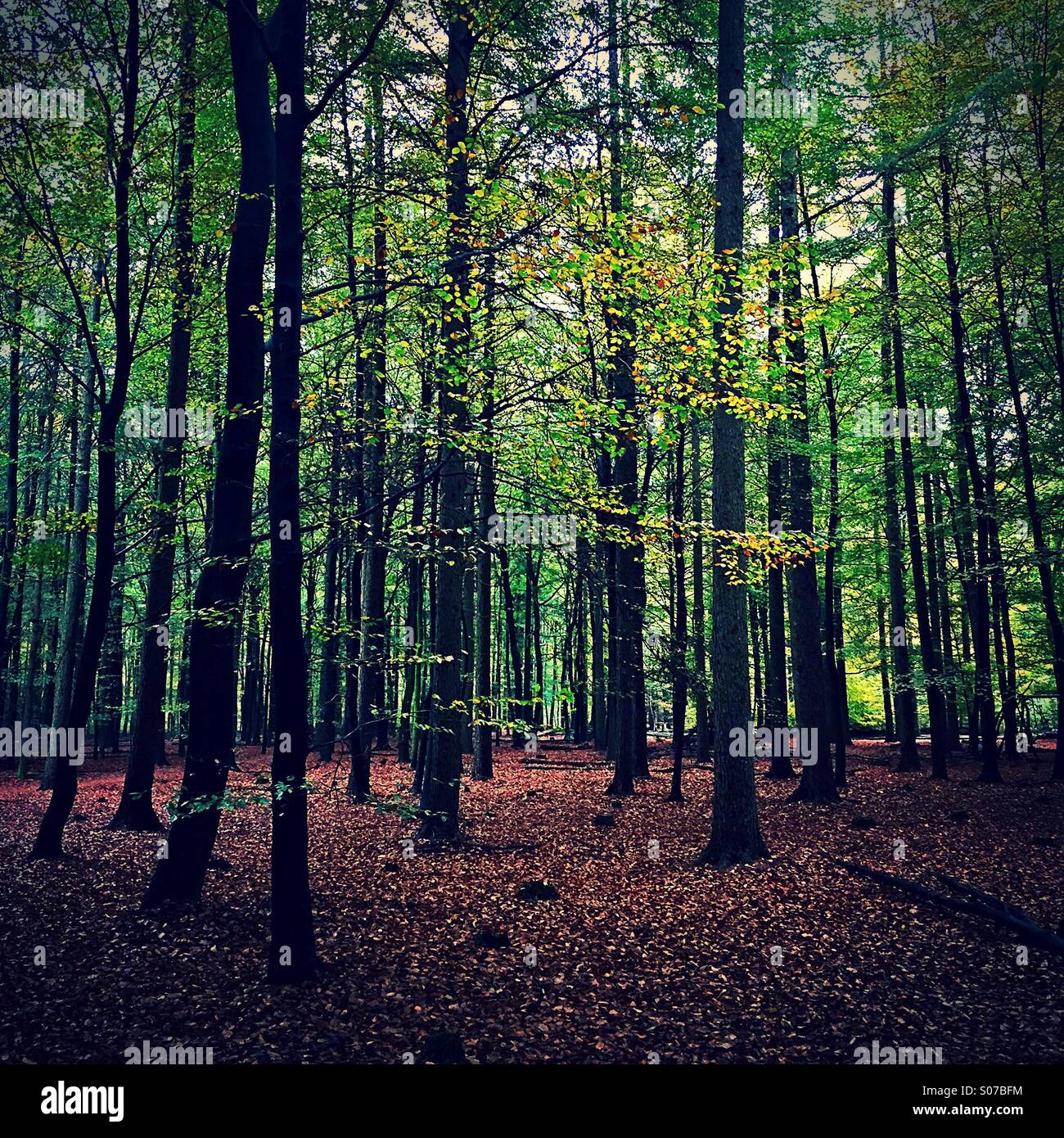 The woods - Stock Image