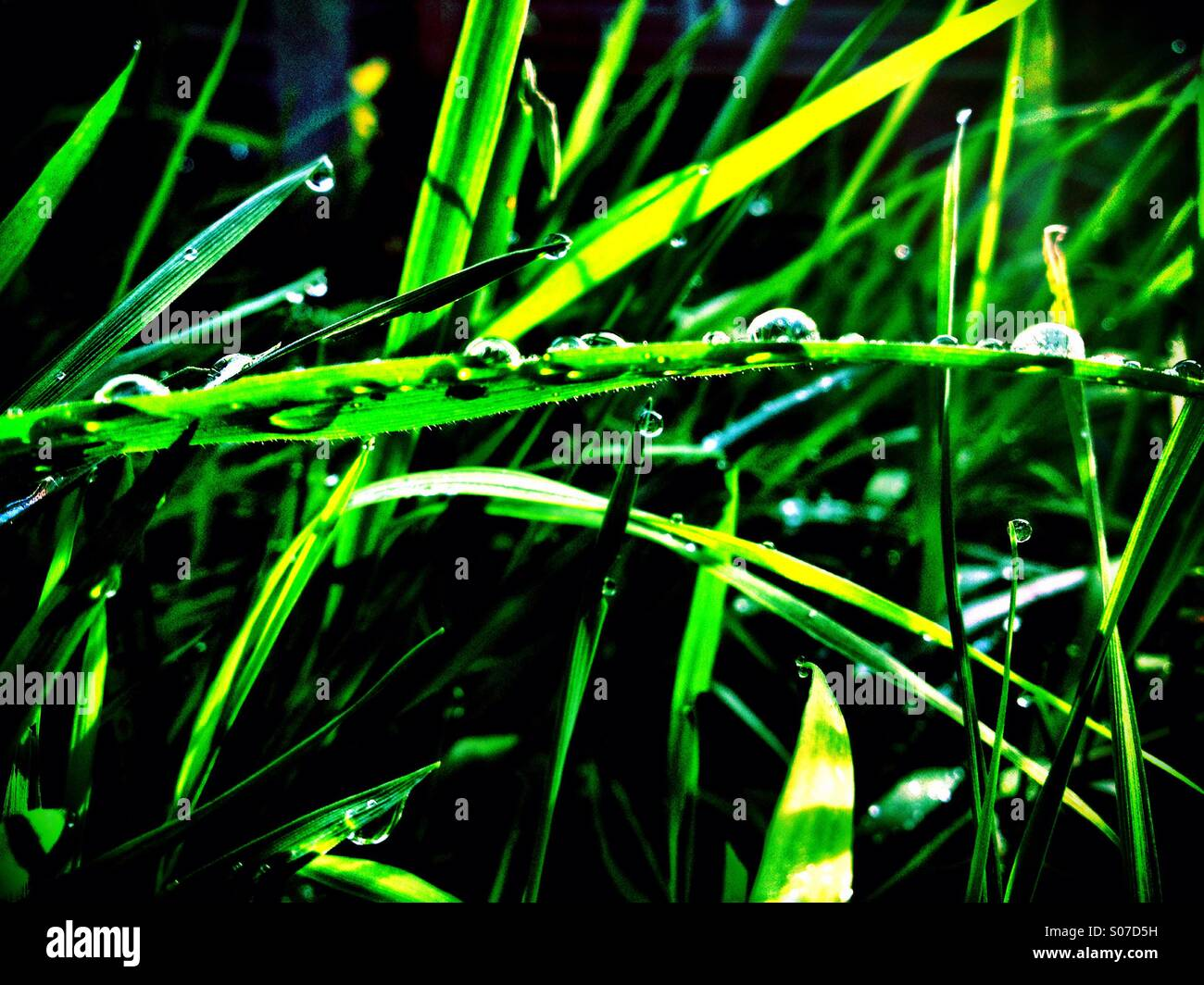 Backlit Grass - Stock Image