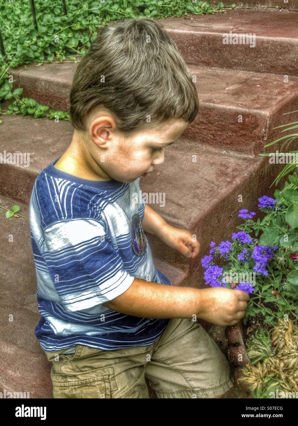 4 Year Boy Bedroom Decorating Ideas: 4 Year Old Boy Discovering Or Picking A Flower. HDR Stock