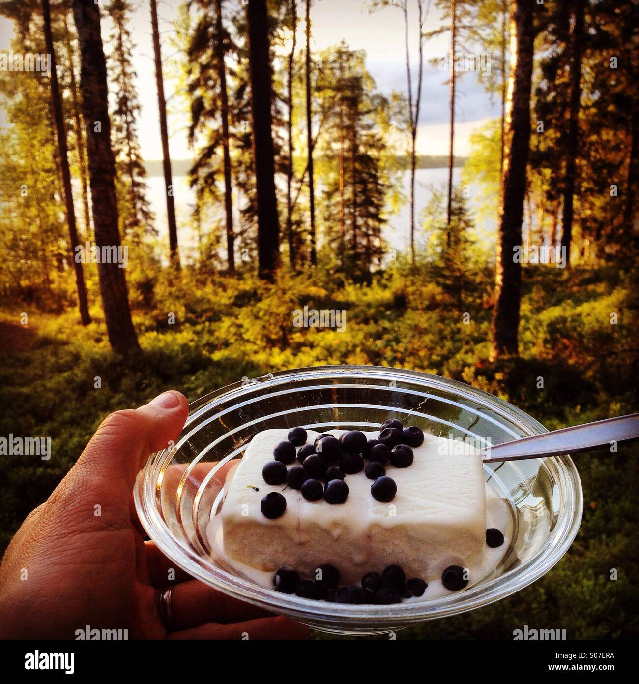Freshly collected blueberries from a Nordic lake summerhouse forest added to an evening ice-cream on holiday - Stock Image