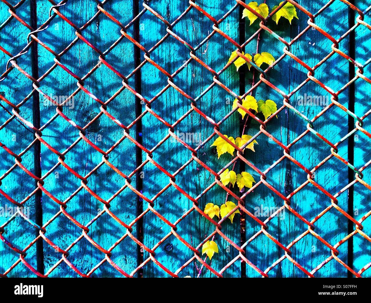 Wire Vine Stock Photos & Wire Vine Stock Images - Alamy