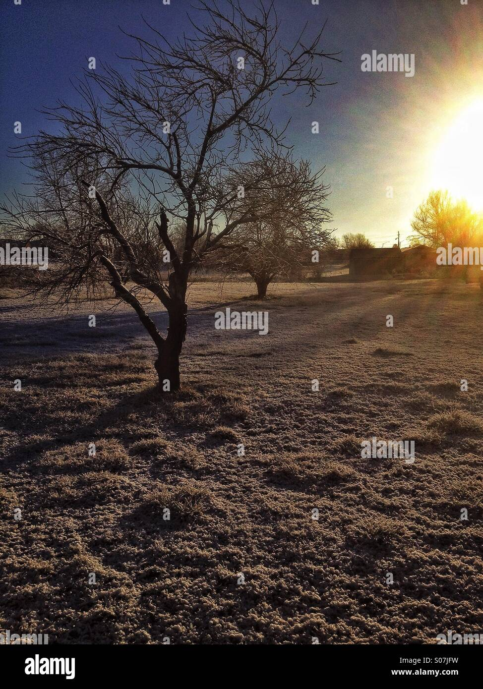 Frosty morning! Darker dramatic side lighting of textures on tree and grass. HDR - Stock Image