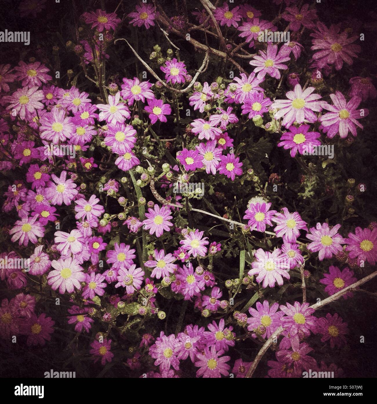 Flowers in darkness - Stock Image