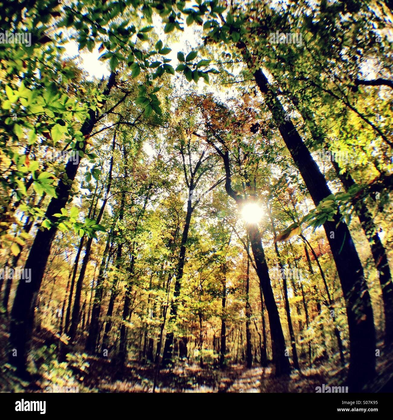 Forest fisheye - Stock Image