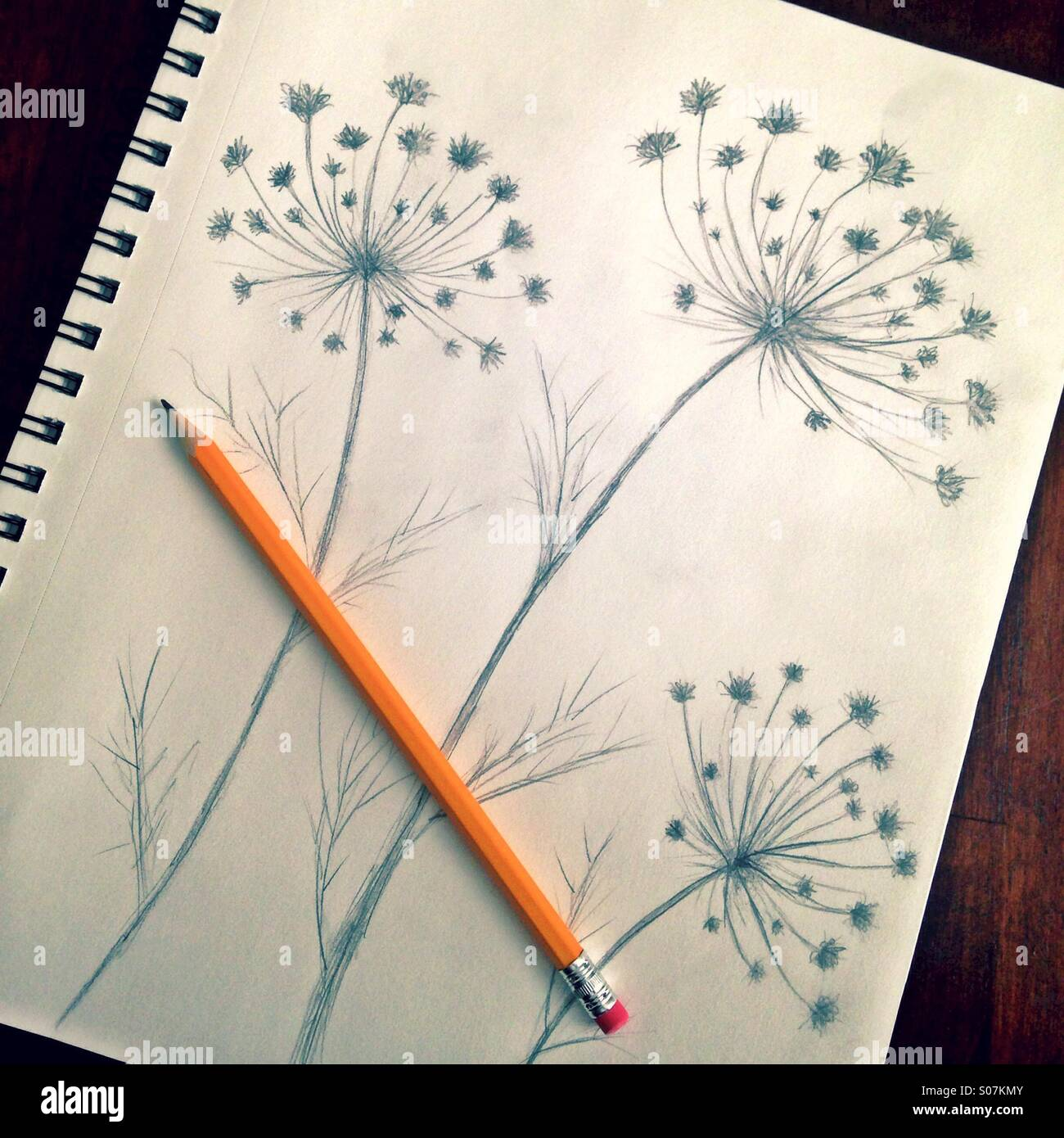 Pencil Drawing Flowers High Resolution Stock Photography And Images Alamy