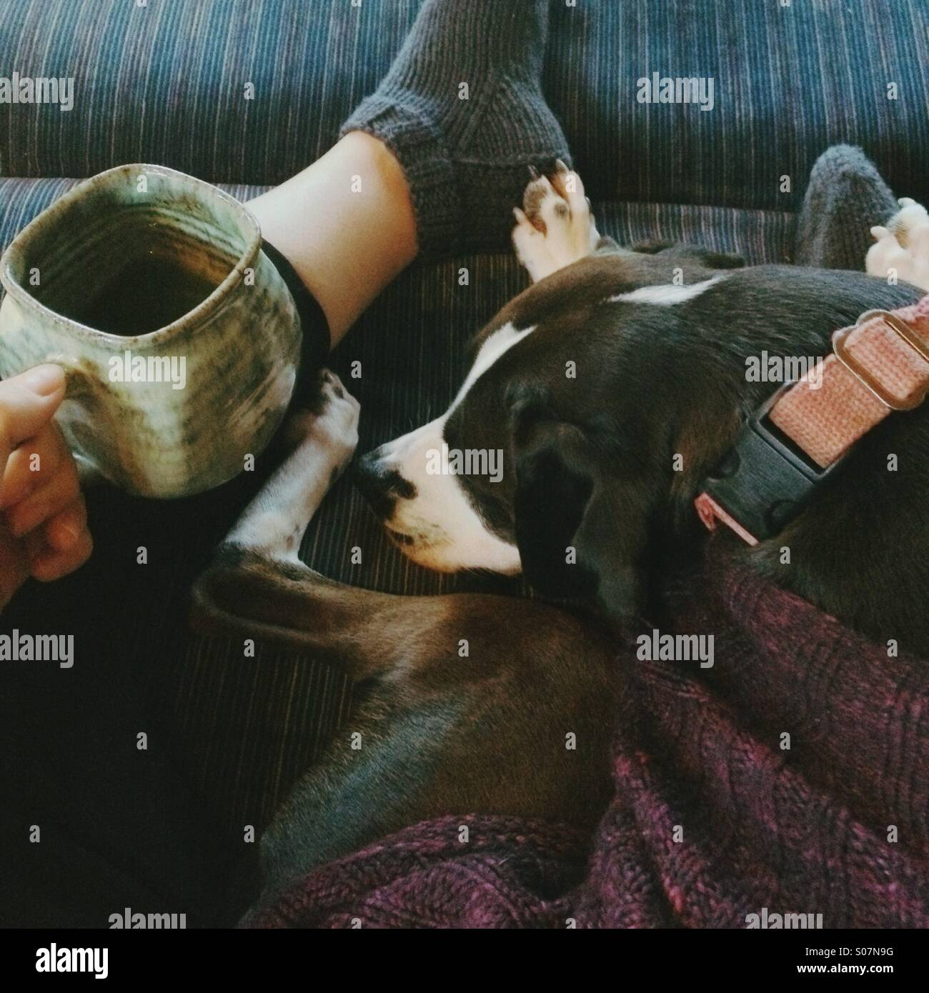 Drinking tea with cute dog on lap on recliner in winter. - Stock Image