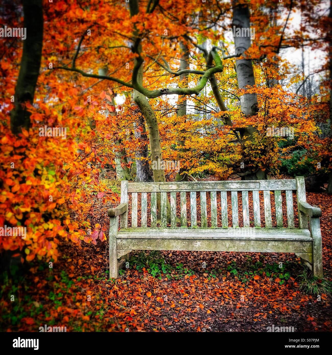 Autumn colours bench at Wandlebury Country Park, Cambridge, England - Stock Image