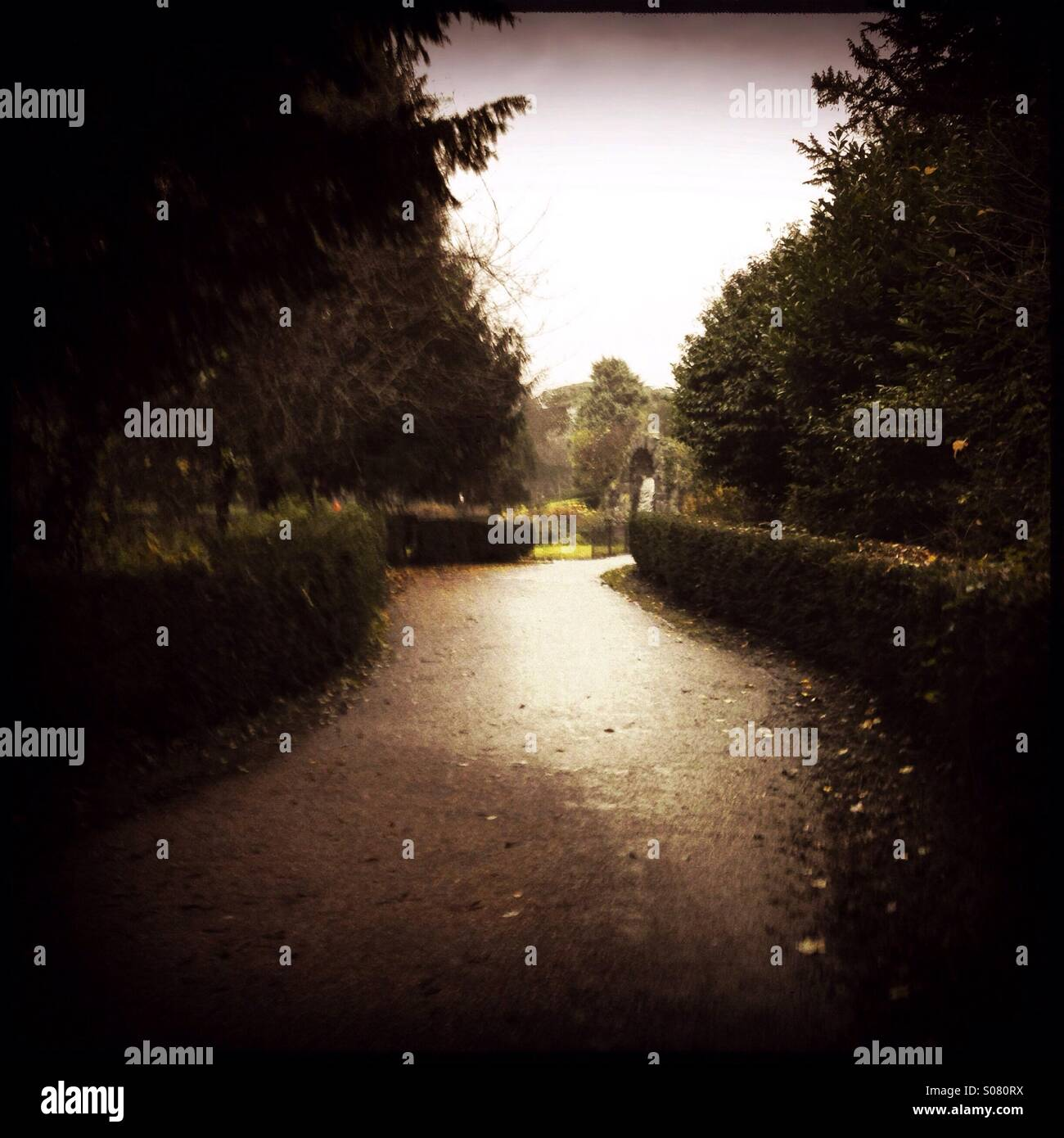 Hedge and tree lined path - Stock Image