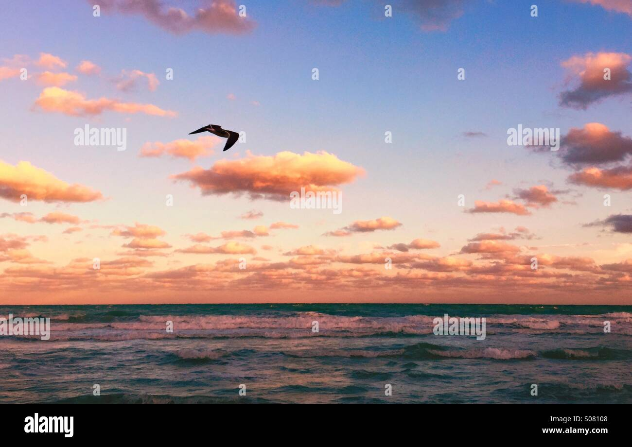 Tropical Sunset on the beach with a bird - Stock Image
