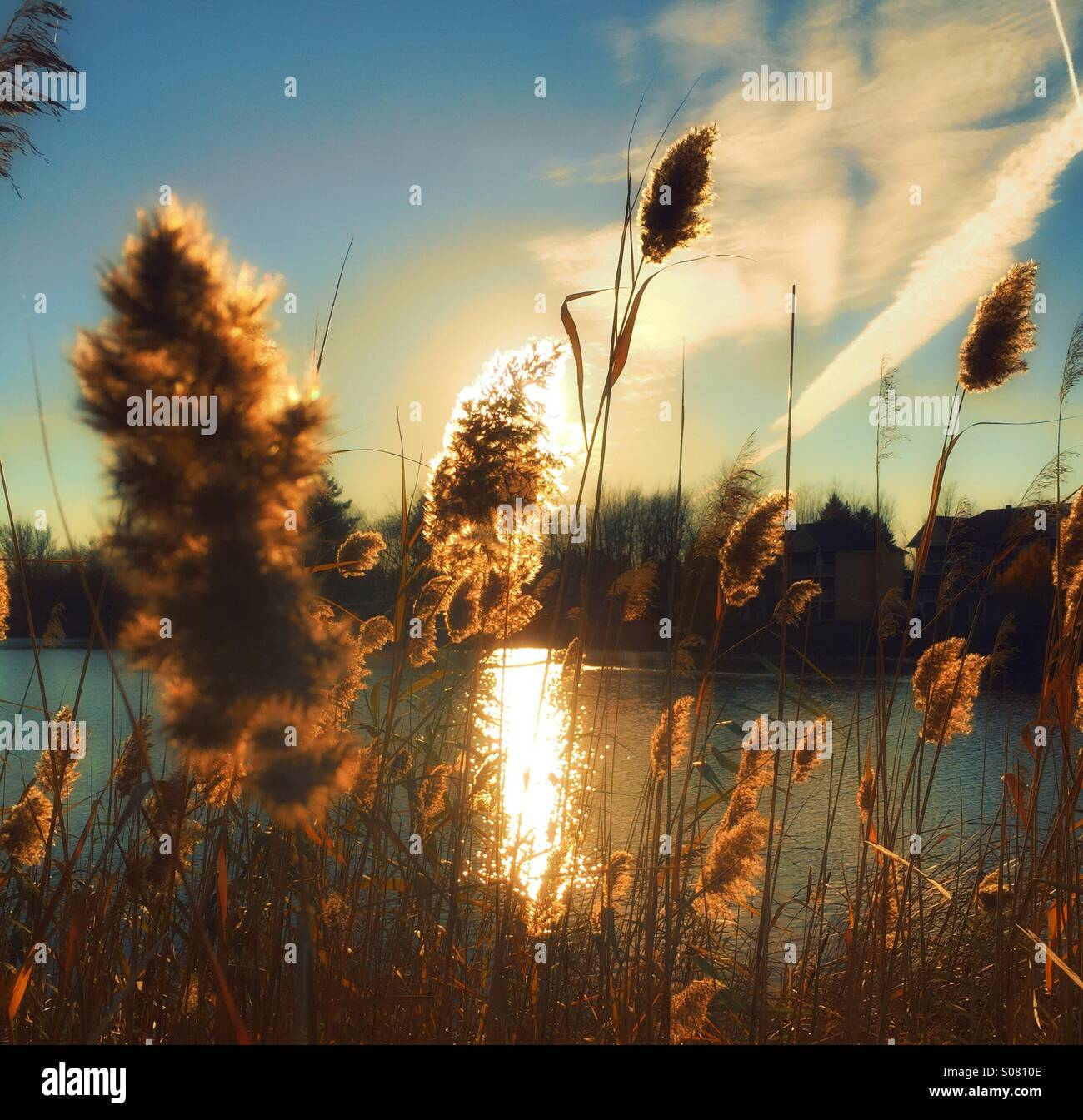 Sunset water and tall grass - Stock Image