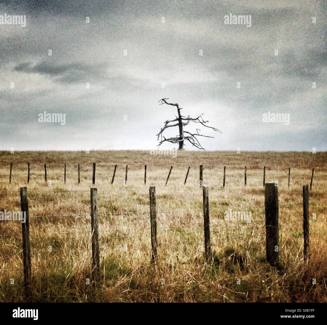 View of a farm with leafless tree Stock Photo