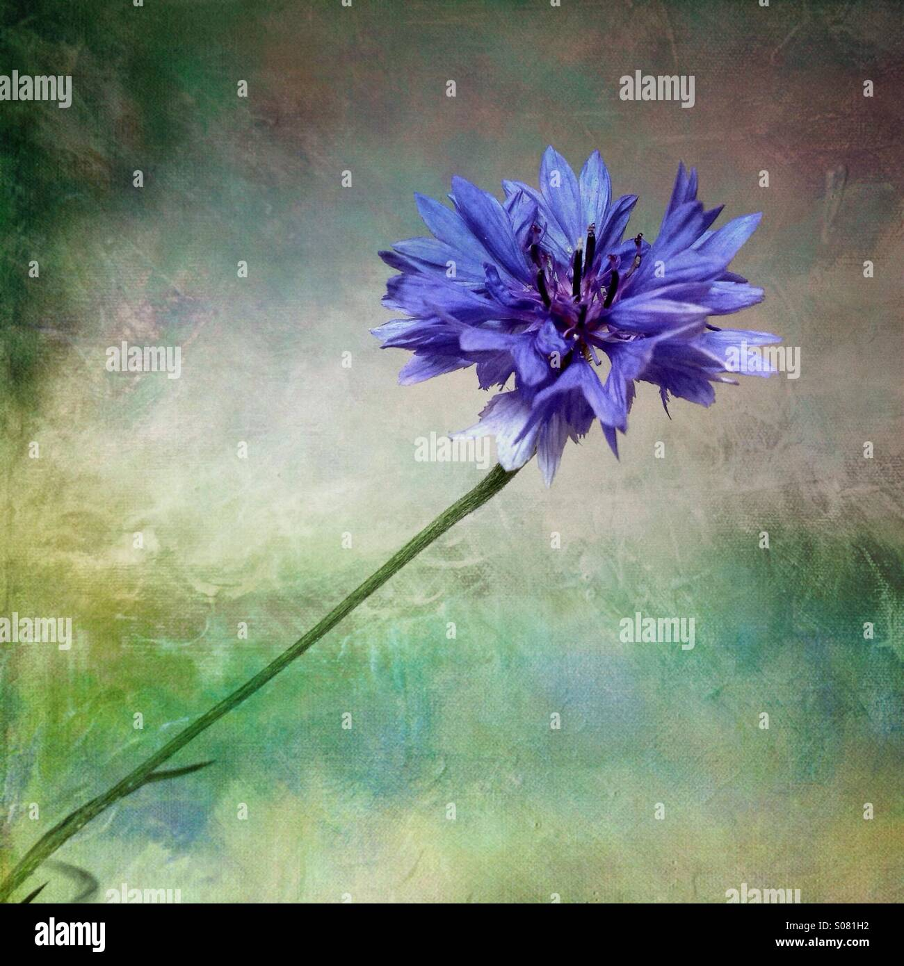 Blue flower with artistic background - Stock Image