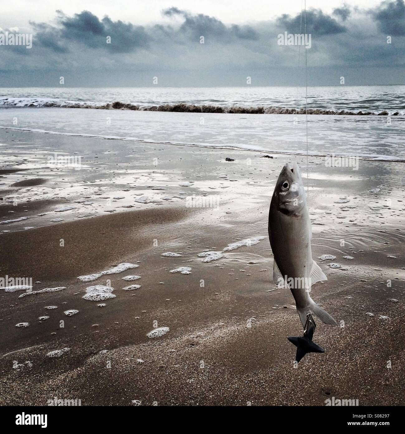 Catch of the Day - Stock Image