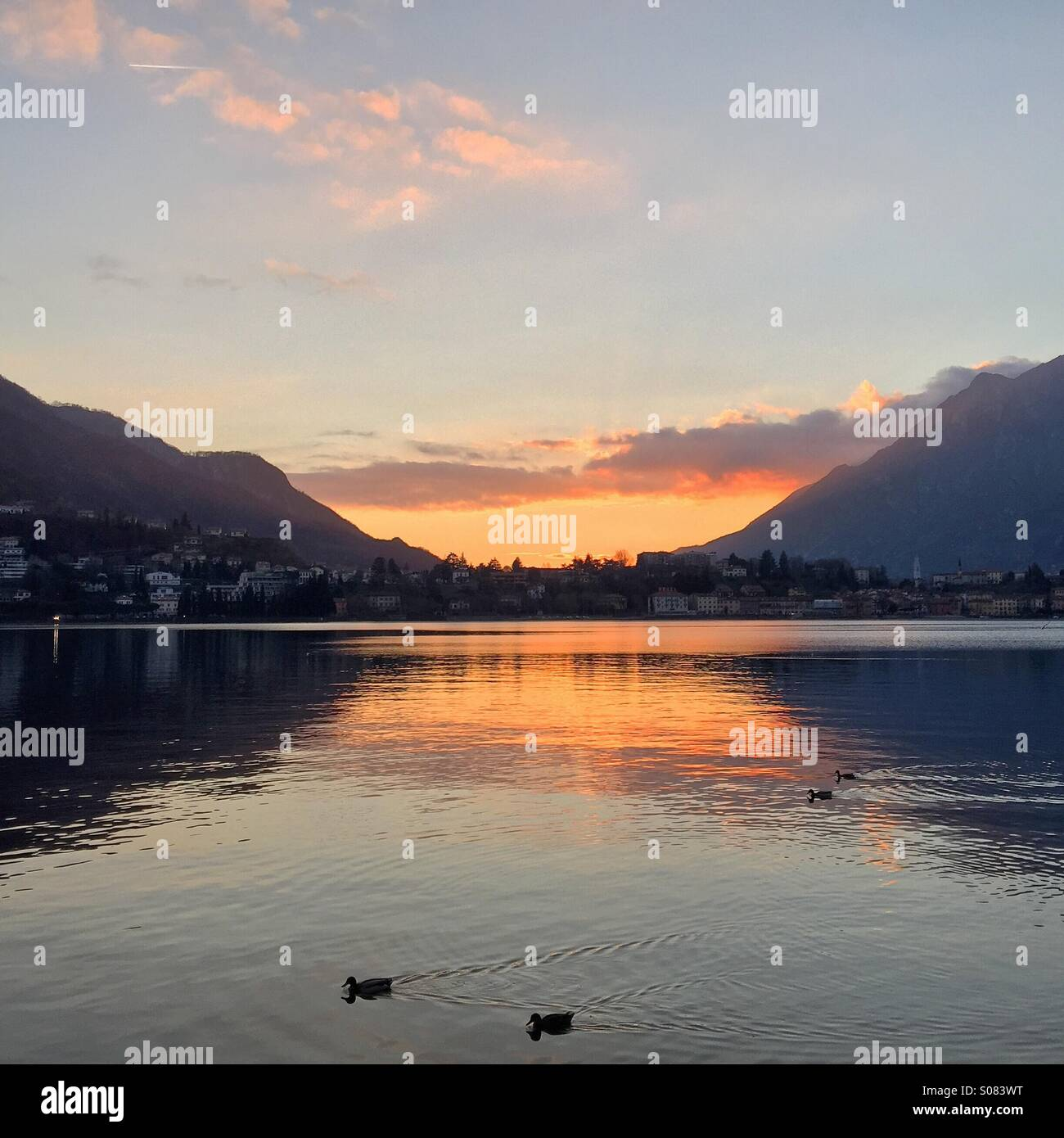 Sunset by the tranquil lake, ducks enjoy a few more moments of sunlight in this gentle winter day - Stock Image