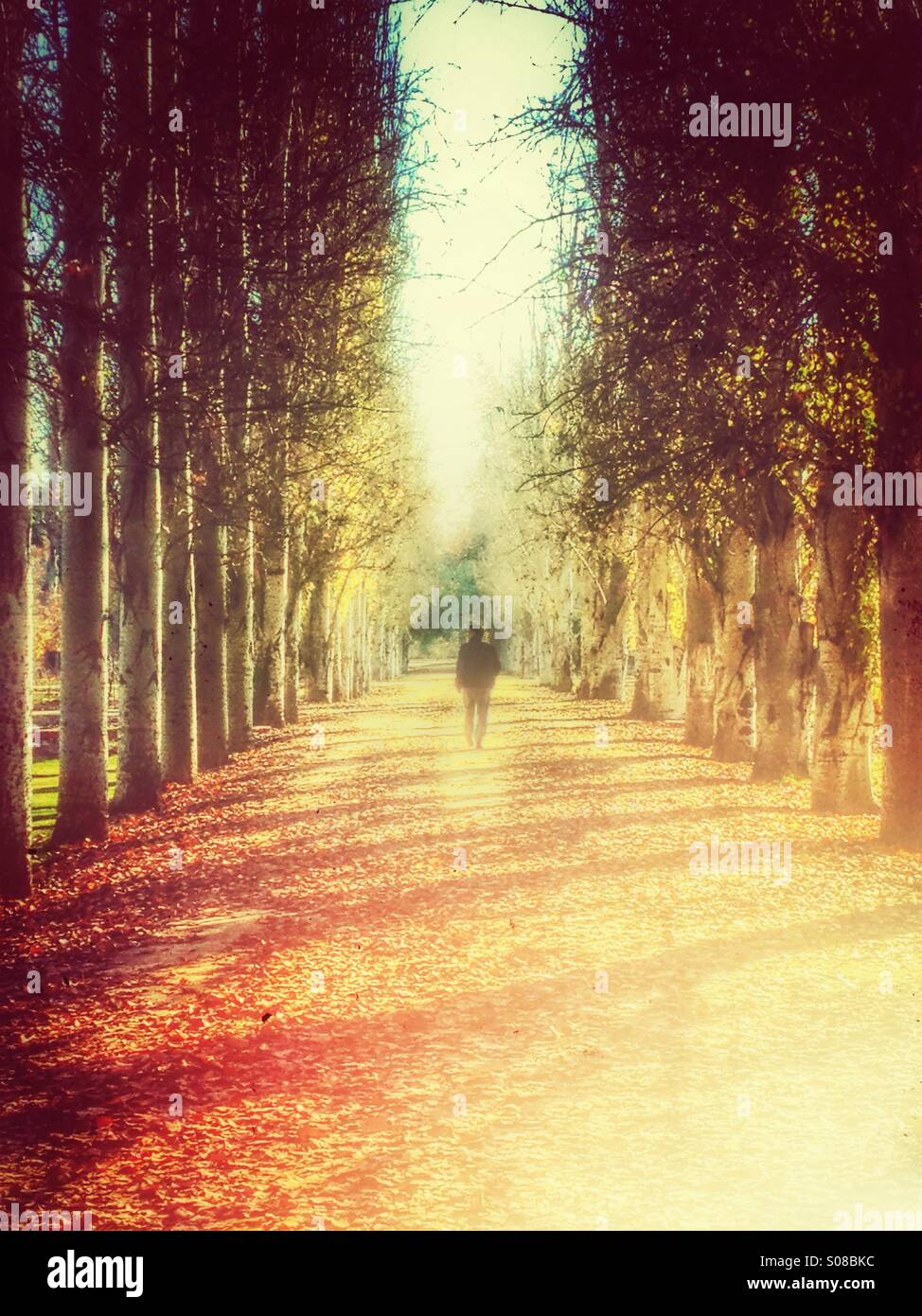 Figure walking through an avenue of trees - Stock Image