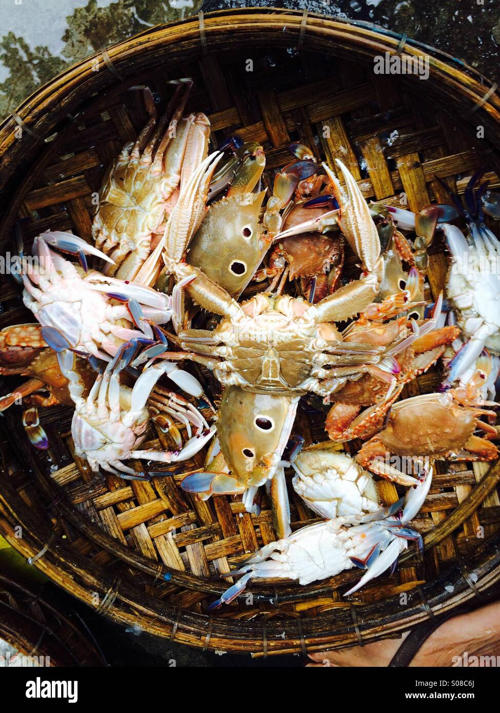 Fresh Crabs on sale at market in Hoi An, Vietnam - Stock Image