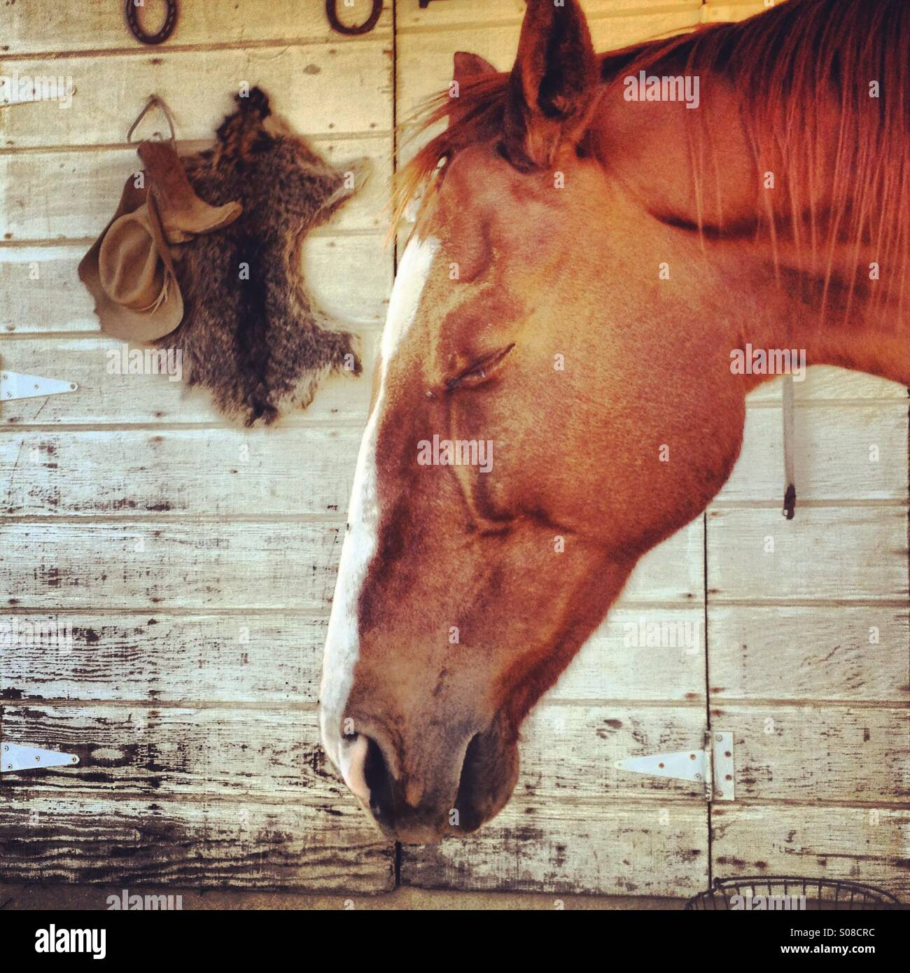 Horse with eyes closed basking in the sun. - Stock Image