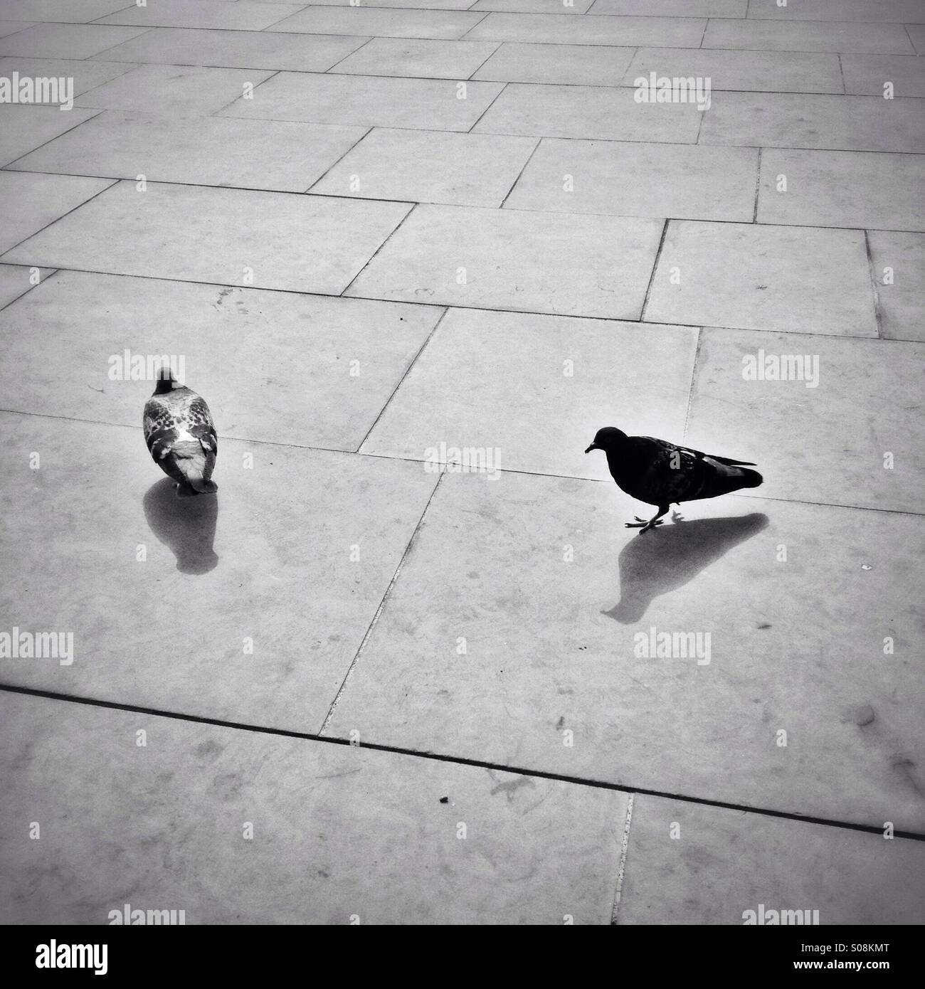 Two pigeons in London - Stock Image