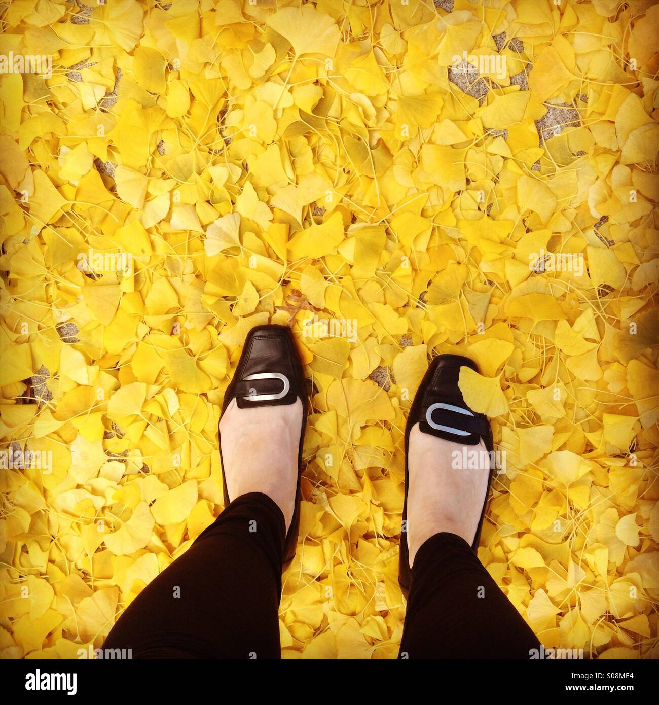 Woman's feet in a pile if yellow leaves - Stock Image
