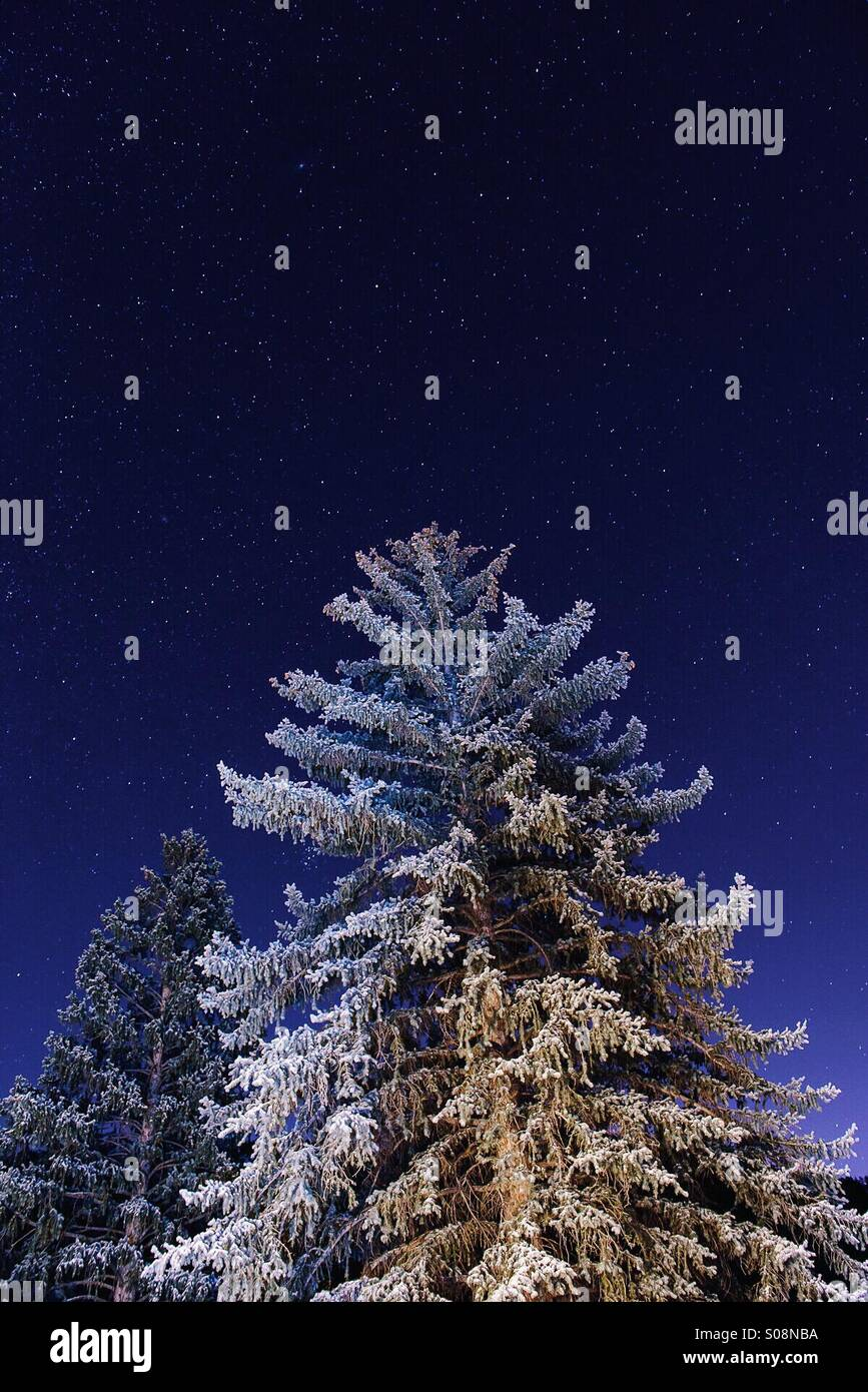 Christmas In Colorado Mountains.Winter Night Snow Covered Christmas Tree In The Colorado