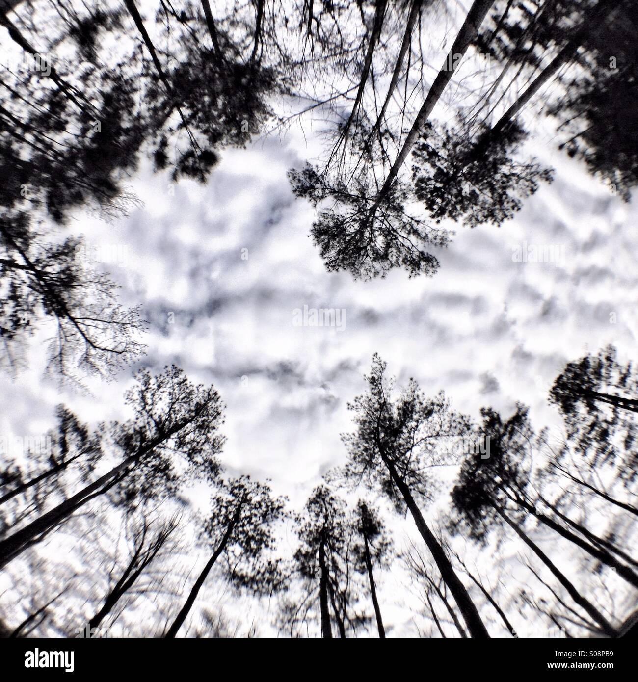 Treetops fisheye - Stock Image