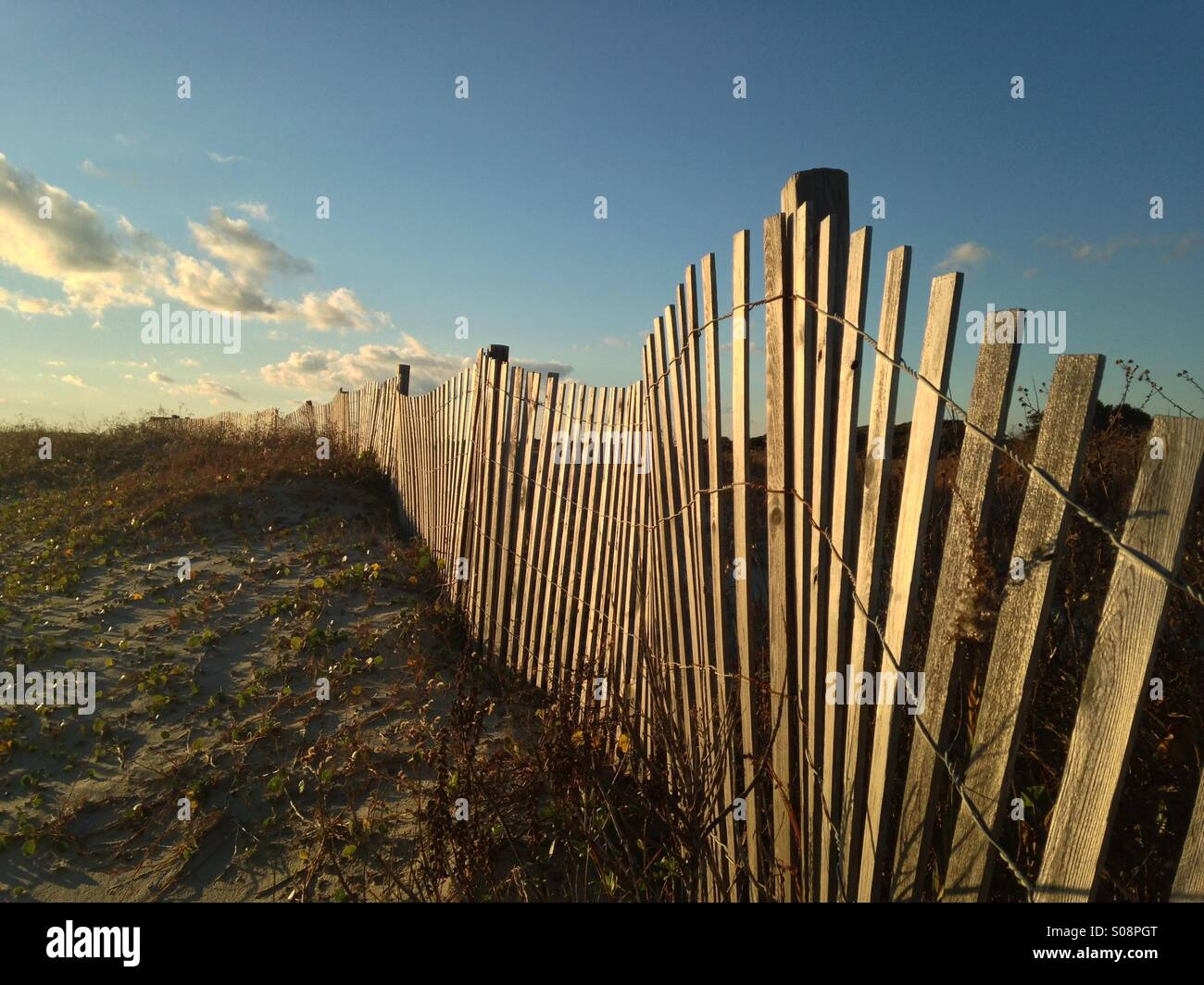 Late afternoon light illuminates a dune fence on Kiawah Island, South Carolina. - Stock Image