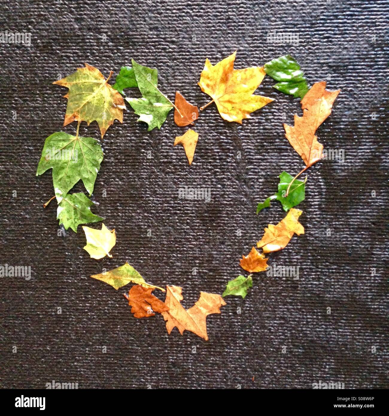 Leaf Love heart - Stock Image