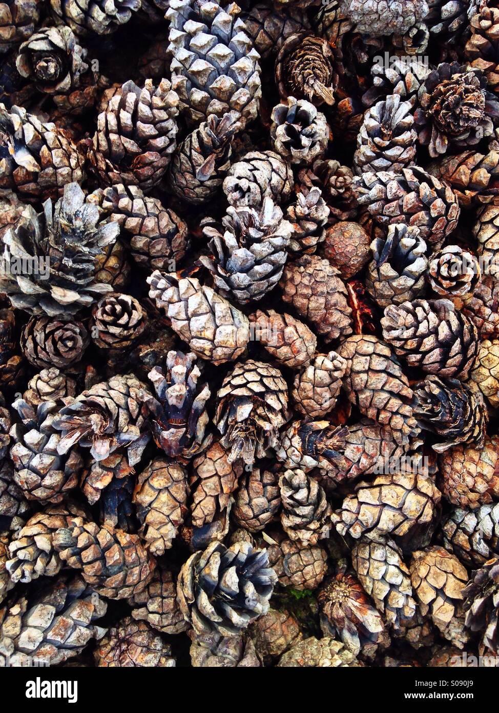 Pine cones background - Stock Image