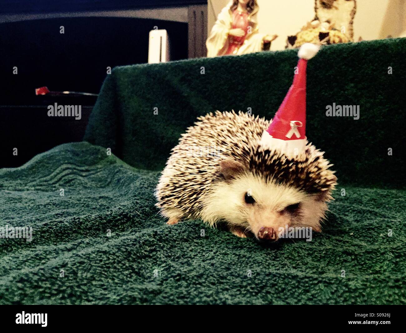 Hedgehog wearing small Christmas hat - Stock Image