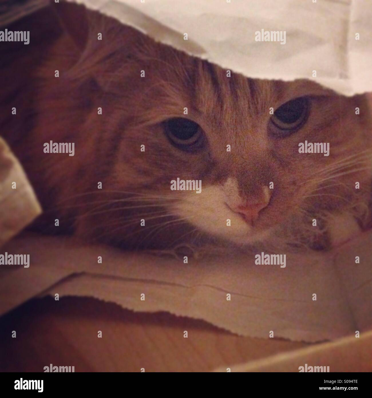 Cat playing hide and seek. - Stock Image
