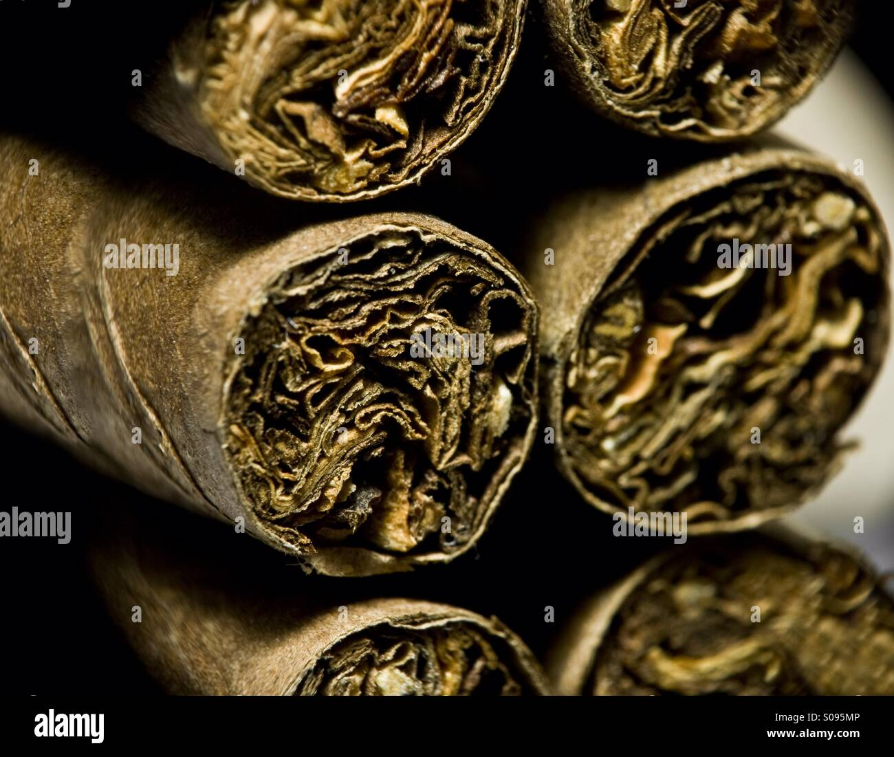 Dry brown cigars - Stock Image