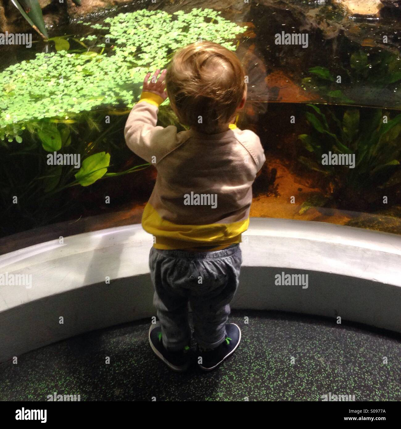 Little boy amazed on a visit to an Aquarium in London. - Stock Image