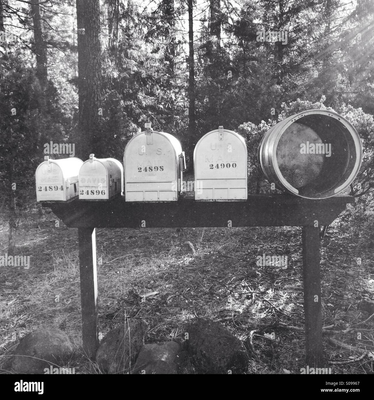 A line of differently sized US mailboxes in a forest setting - Stock Image