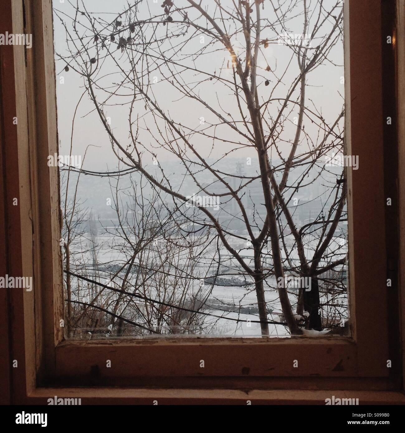 Window trees - Stock Image