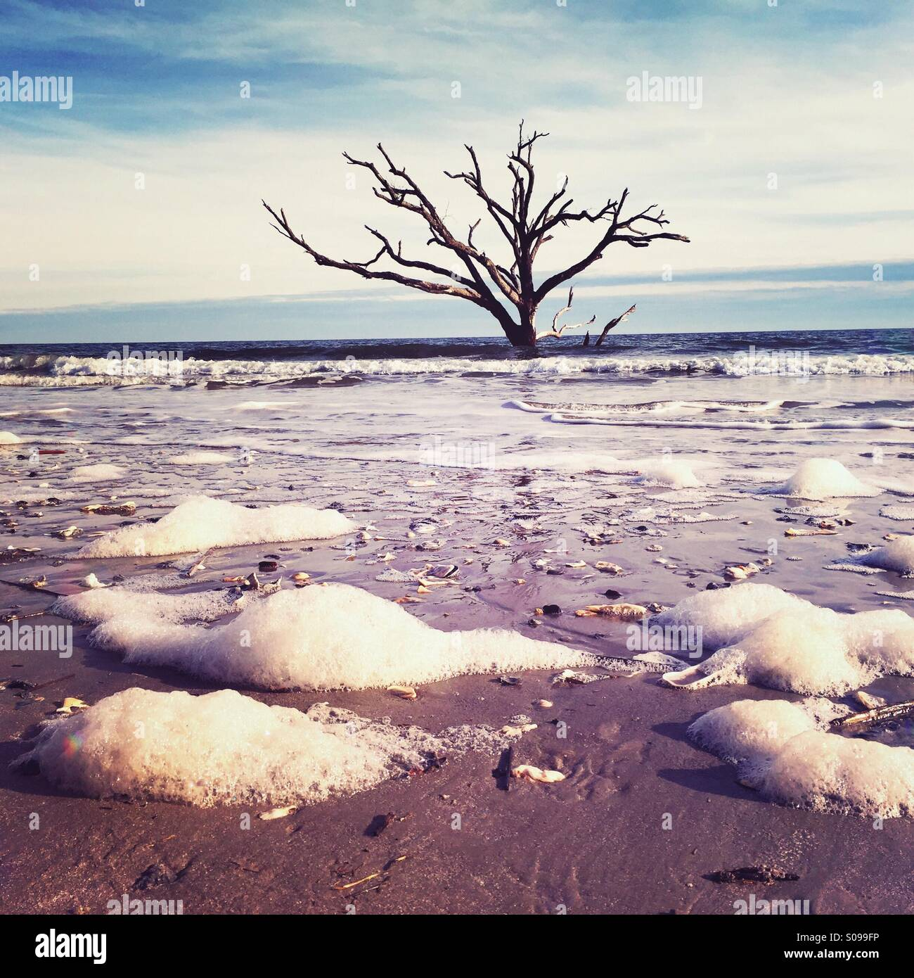 A lone dead tree  stands in the surf at Botany Bay on Edisto Island, SC. - Stock Image