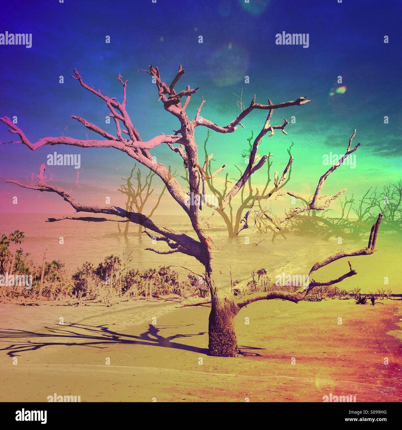 This is a double exposure of two different images of trees with a very colorful sky and Brad ground. - Stock Image