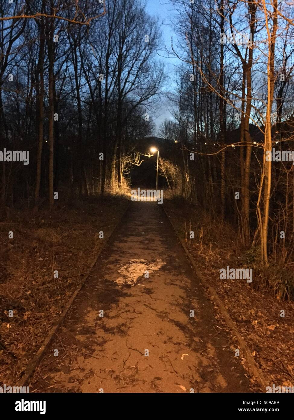 Lowlight photography of a woodland path - Stock Image