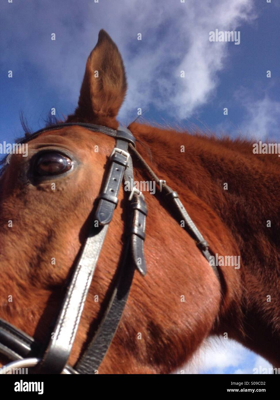 A horse, focus on eye - Stock Image