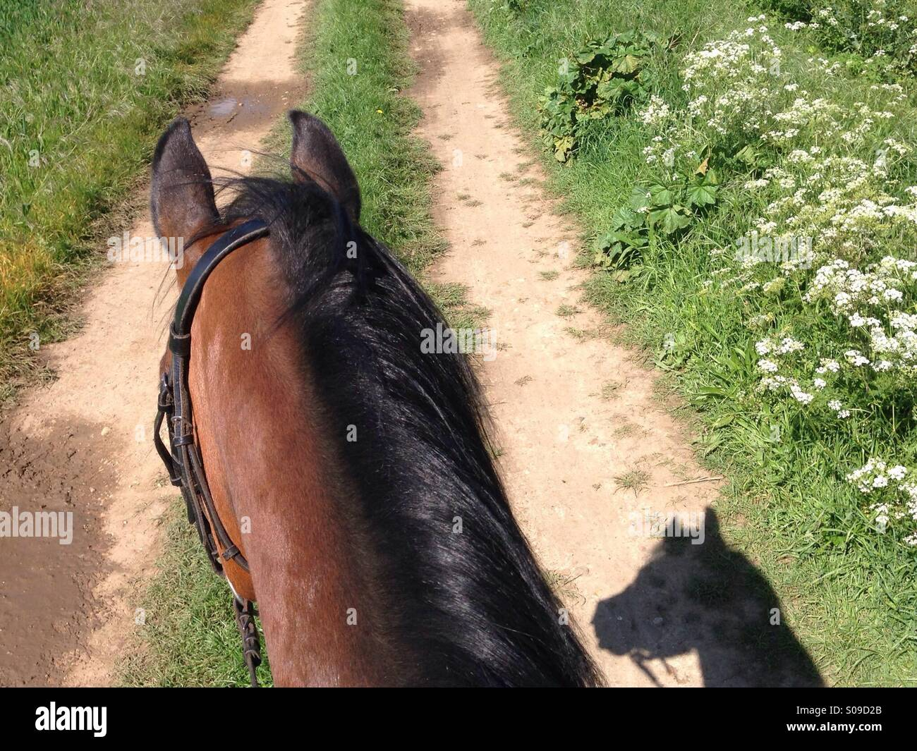 Horse riding in summertime - Stock Image