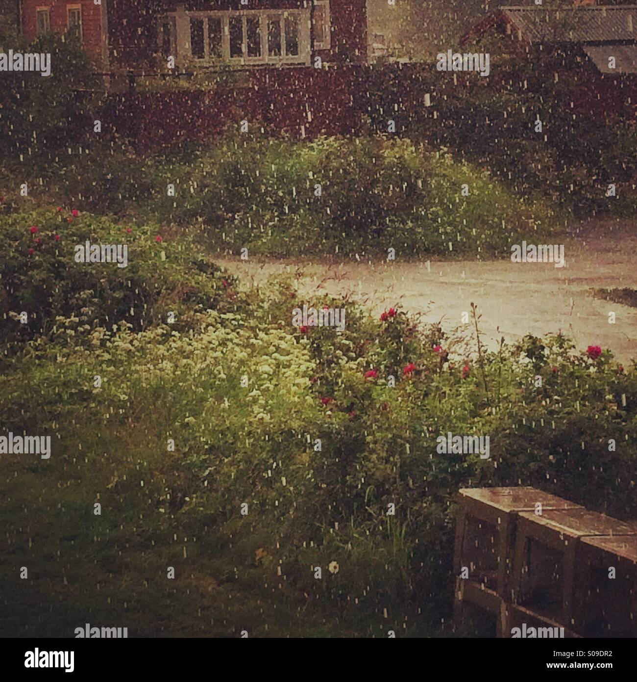 Hail in the middle of july in Sweden - Stock Image