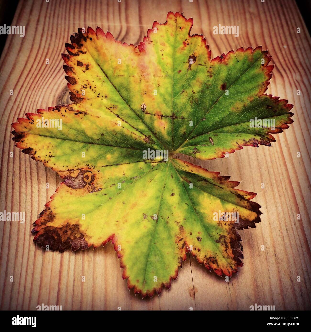 Leaves in the garden - Stock Image