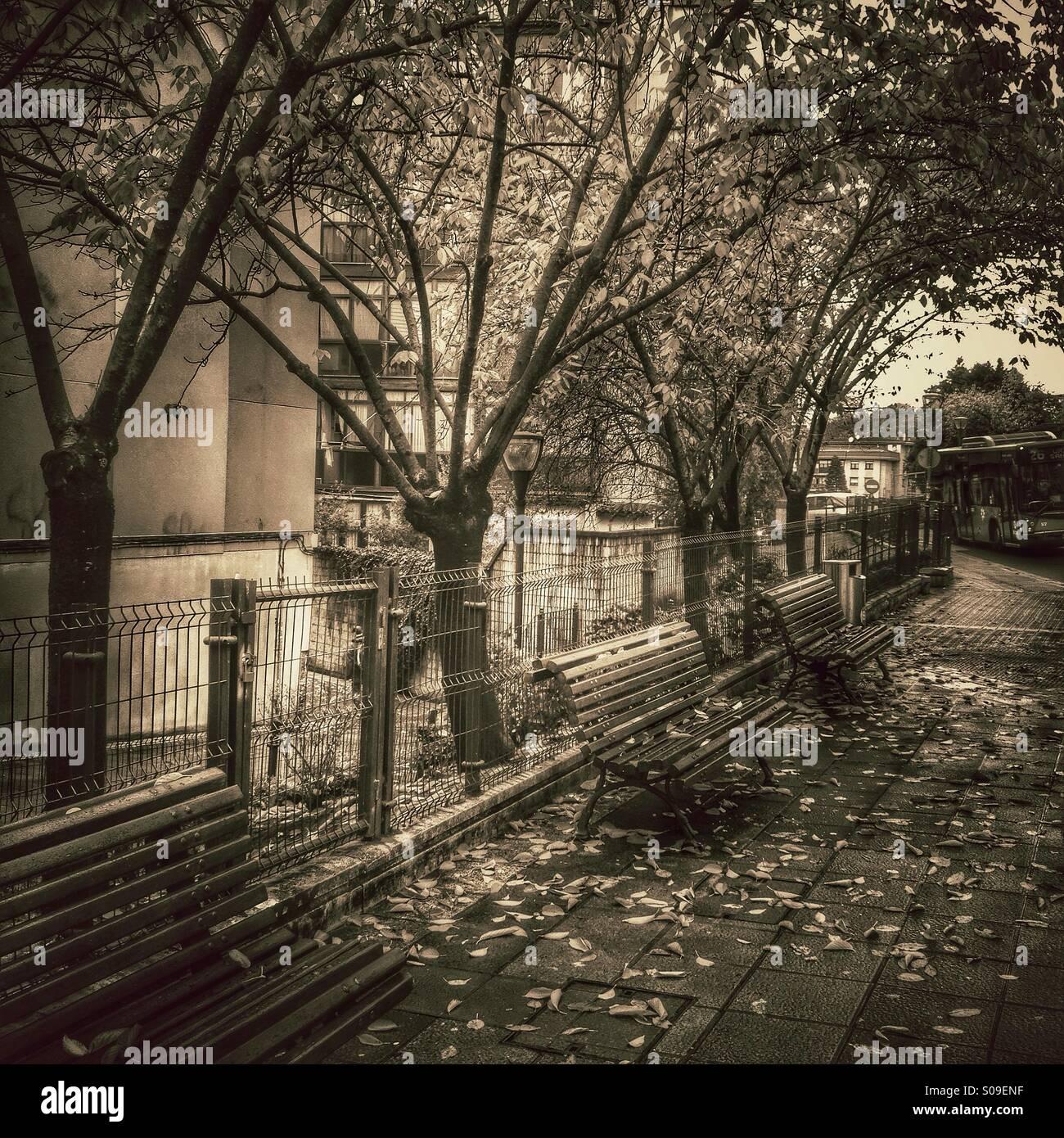 Lilly Roma Wallpaper: Urbano Stock Photos & Urbano Stock Images